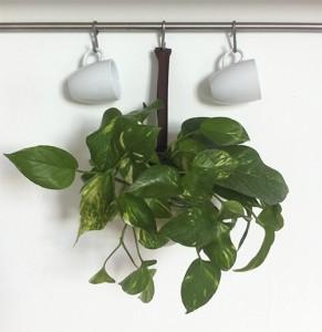 Poto, planta de interior